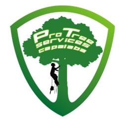 Pro Tree Lopping Capalaba