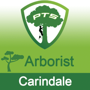 Pro Tree Lopping Arborist Carindale