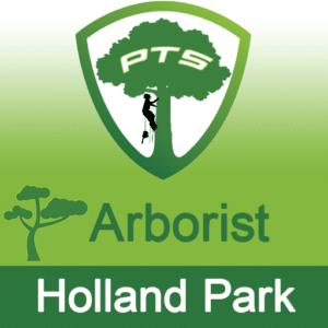 Pro Tree Lopping Arborist Holland Park