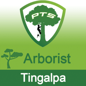 Pro Tree Lopping Arborist Tingalpa